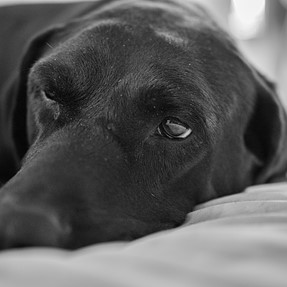New Camera and new lens so my dogs up close and personal