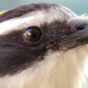 Photographing birds with close-up filter - P900