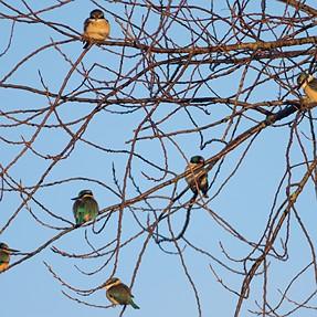 A few Kingfisher BIF's