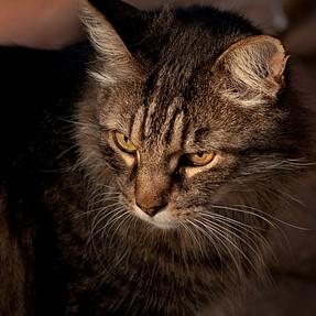 :-)) Sunday Cat! #512 August 6, 2017 ((-: