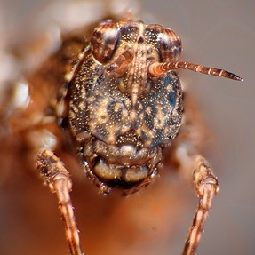 Arachnaphobias beware..
