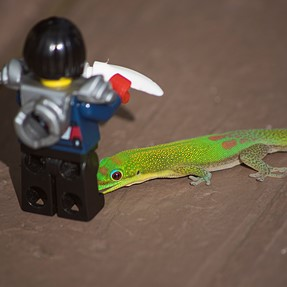 Lego Ninja ready to slay Gold Dust Day Gecko