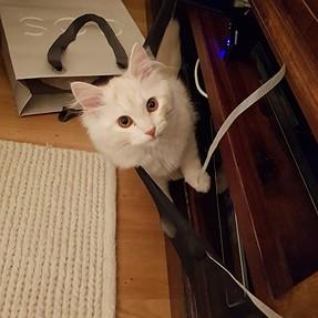 :-)) Sunday Cat! #525 November 5, 2017 ((-: