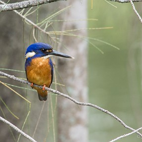A kingfisher afternoon