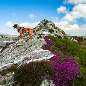 Me dog on a rock!