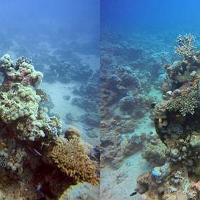 3D cross eyes underwater