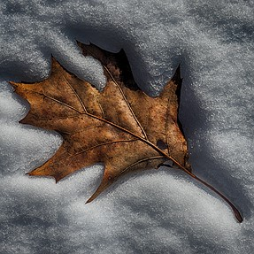 Fall/Winter memento