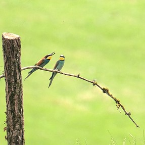 Wedding gifts for bee eaters...