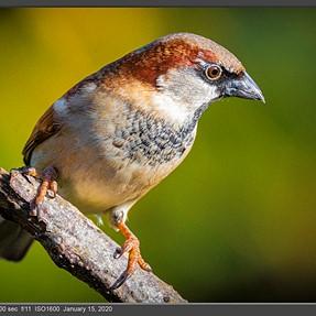 .Few more garden bird