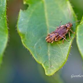 little bug