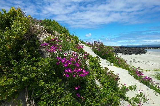 Griffins Island, Port Fairy: Leica Talk Forum: Digital