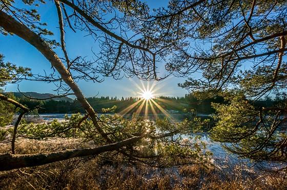 природа река солнце деревья  № 198604 бесплатно