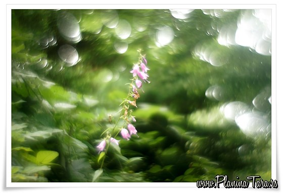 Which Helios 44 For Best Swirly Bokeh Adapted Lens Talk Forum Digital Photography Review
