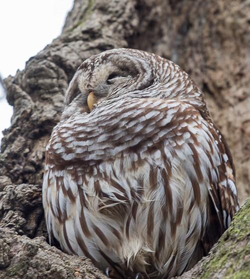 Various Louisiana Birds Nature And Wildlife Photography Forum Digital Photography Review