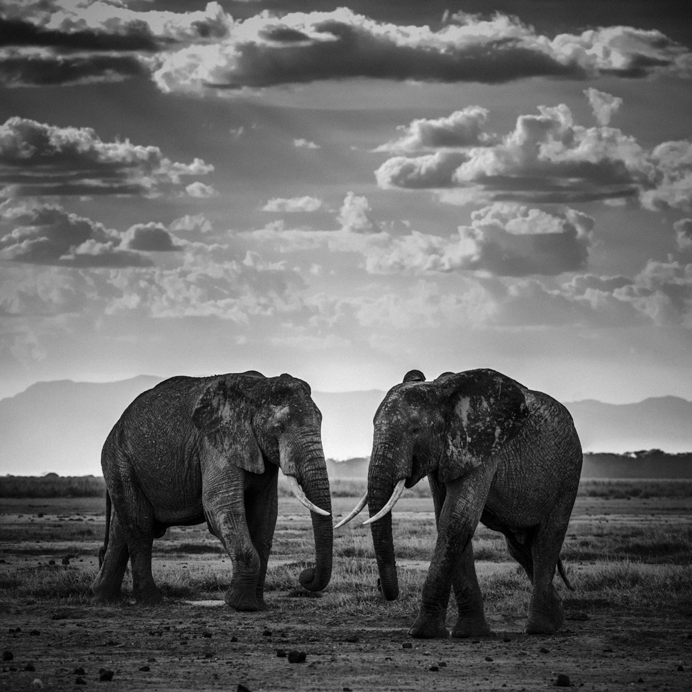 out of africa the black and white nature photography of laurent