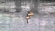 Samsung Galaxy Camera 2 goose sample video