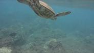 Nikon 1 AW1 underwater sample video