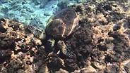 Olympus TG-4 sea turtle sample video