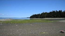 Nikon D810 beach pan - standard