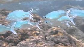 Nikon Coolpix AW110 underwater sample video #2